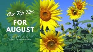Tips for Your Garden in Early August