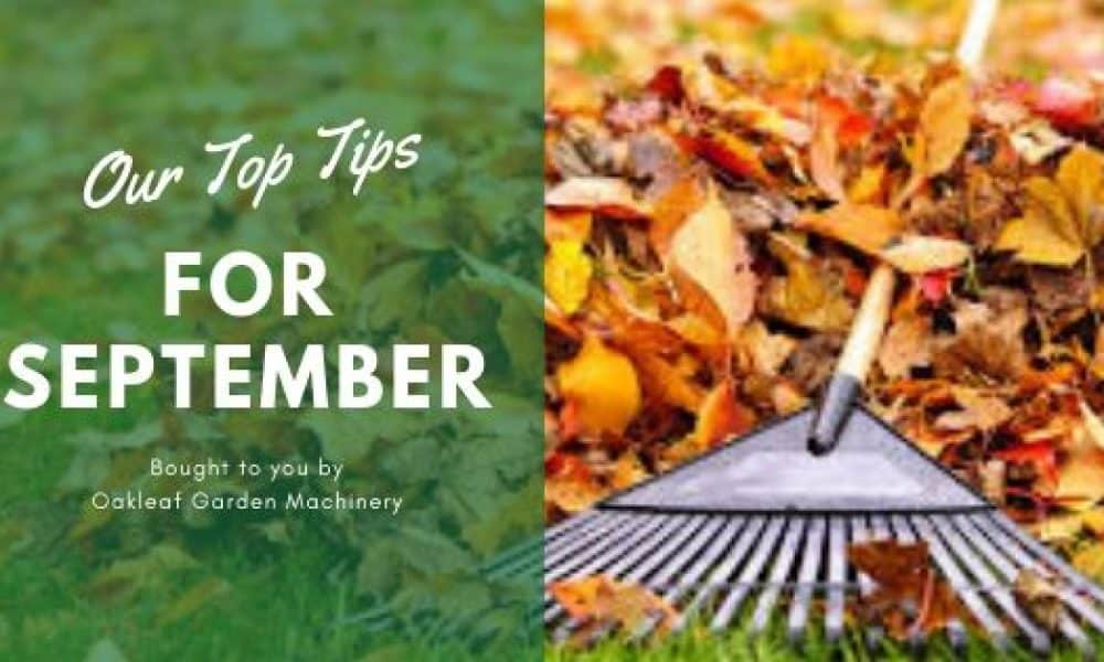 Our September Top 10 Gardening Tips.