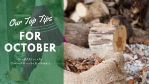10 Top Tips for October