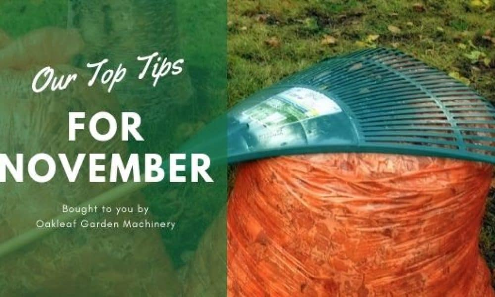 Top Tips for November