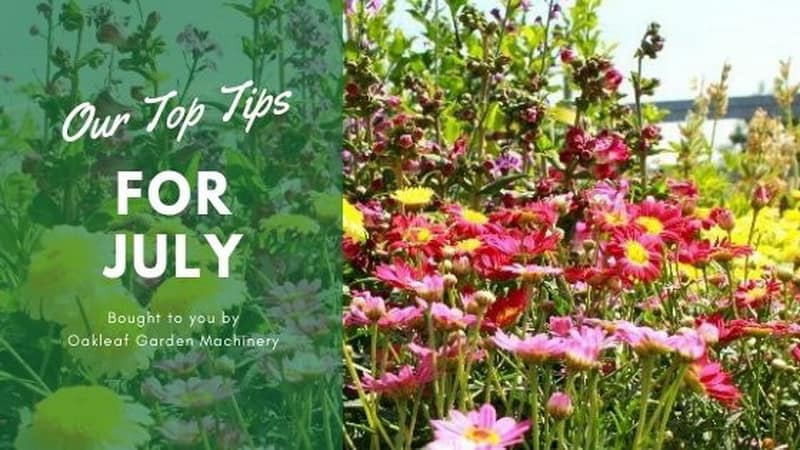 Make sure you keep new plants well watered, using grey water where possible, and hoe off weeds, which thrive in the sunshine.
